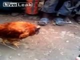 Kids Play With Headless Chicken
