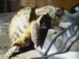 Turtle Fucking a Shoe