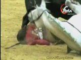 Bull takes down horse and rejoneador