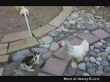 Rabbit Chicken Streetfight