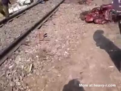 Elephant vs Train