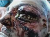 Maggot May