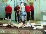 Halal slaughter house