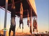 public display of hanging corpses