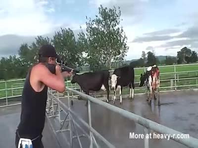 Cow Execution By Gun