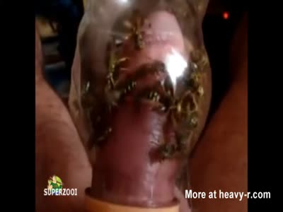 Wasp Cock Torture