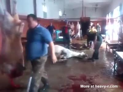 One Man One Horse Muslim Vıctım