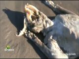 The Montauk Monster Exposed