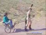 Slave Pulls Carriage