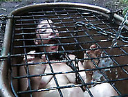 Maggie Mead Is In The Cage Hole Filled With M...