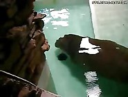 Hippo Poops Underwater - Poop!
