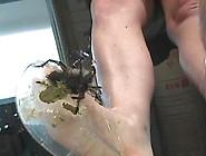 Tammy(Usa)-Spider Crush