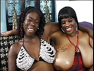 Two Black Fat Milfs With Gigantic Racks Lick ...