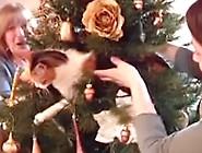 Cat Shit. Mp4