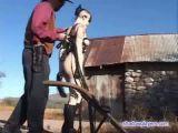 Plowing Pony