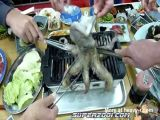 cooking a live octopus