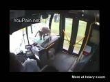 Deer Hit By Bus
