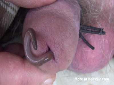 Two Worms In Cock
