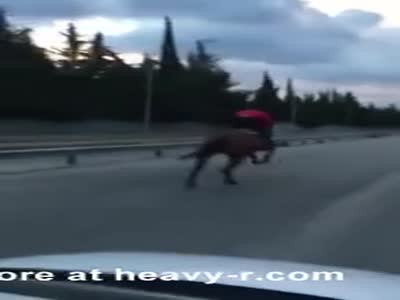 Horse Goes Mental On Highway