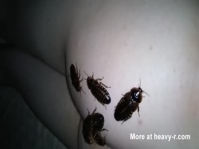 Roaches chilling on my butt