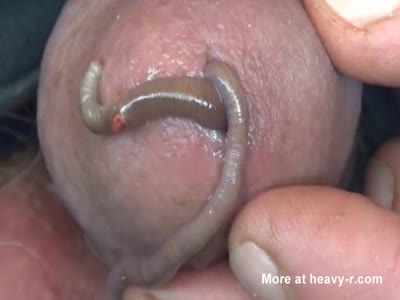 Many Worms (in my cock)