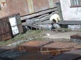 Woman Attacked By Polar Bear