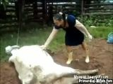 Cow breaks veterinarian's face