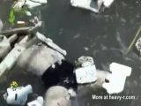 Rotting Body In River