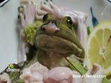 Live Frog Sashimi