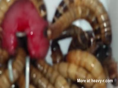 Superworms close Up eating pee hole