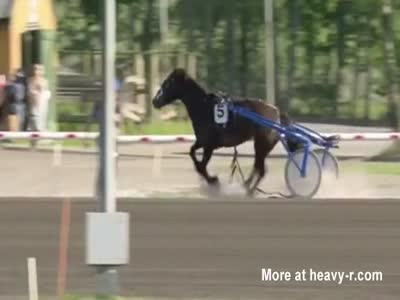 Out Of Control Racehorse Impales Himself