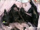Loads of Charred Bodies Found
