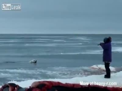 Hungry Polar Bear Takes Head Shot