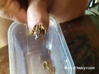 Maggots 10