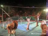 Lion Attack At The Circus