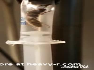 Wasp-carousel