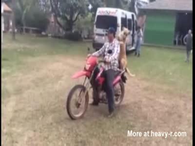 COMEDIA BAGACERA: cachorro Motoqueiro
