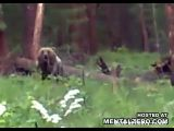 Brown Bear Goes In Full Attack On Hunters