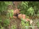 Two Mexican Girls Found Raped And Murdered