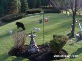 Bulldogs vs Black Bear