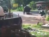 Elephant Kills Man
